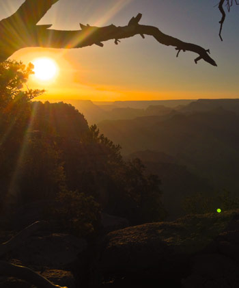 Juniper snag and sunset over Grand Canyon